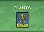Plants Make Food