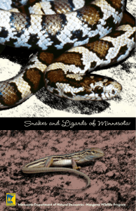 Snakes and Lizards of Minnesota