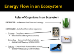 Roles of Organisms in an Ecosystem PRODUCER