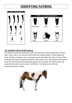 identifying patterns - paint horse association of new zealand
