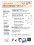 What are Endocrine Disruptors