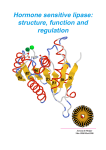 Hormone sensitive lipase: structure, function and