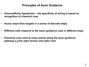 How are axons guided to their targets?