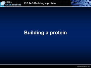IB2.14.3 Building a protein