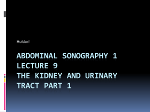 Renal pelvis - Echo ED: Diagnostic Medical Sonography Education