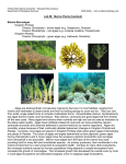 Intro to Marine Biology Lab - FIU Faculty Websites