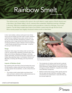 Rainbow Smelt - cloudfront.net