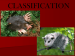 classification - Wando High School