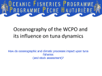 Oceanography of the WCPO and its influence on tuna dynamic