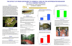 the effect of prior exposure to chemical cues on the antipredator