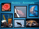Notes: Animals