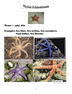 + Means = spiny skin Examples: Sea Stars, Sea urchins, Sea