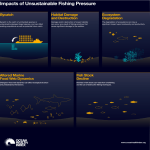 Impacts of Unsustainable Fishing Pressure