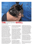 the eastern quoll - Australian Wildlife Society