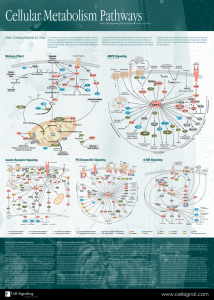 Cellular Metabolism Pathways