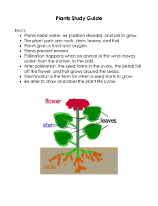 Plants Study Guide