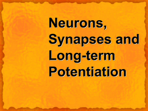 Neurons, Synapses and Long-term Potentiation