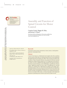 Assembly and Function of Spinal Circuits for Motor Control