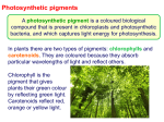 Photosynthetic pigments and experiments