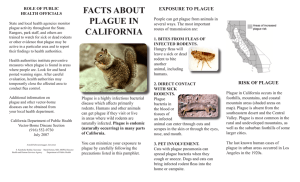 FACTS ABOUT PLAGUE IN CALIFORNIA