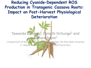 Reducing Cyanide*Dependent ROS Production in Transgenic