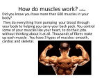 How do muscle work