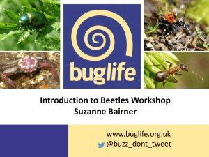 Introduction to Beetles Workshop Suzanne Bairner
