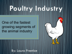 Poultry Industry - Poultry Info 101