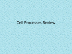 Cell Processes Review