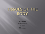 TISSUES OF THE BODY