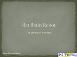 Rat Brain Robot