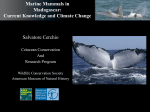 Initial studies of small cetaceans in Madagascar and Gabon: Recent