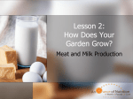 Lesson 2: How Does Your Garden Grow?
