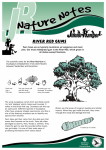 Nature Notes - River red gums