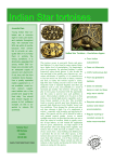 Indian Star Tortoise Caresheet
