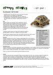 Russian Tortoise - Animart Pet Stores