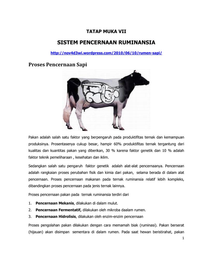 38+ Urutan sistem pencernaan hewan ruminansia terupdate