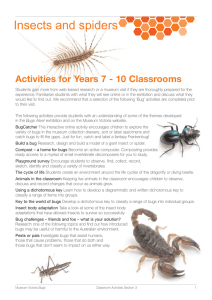 Insects and Spiders - Activities for Years 7-10