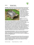 footed tortoise care sheet - Tortoise...Red
