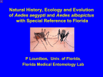 Natural History, Ecology and Evolution of Aedes aegypti and Aedes