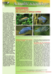 Darwin`s dream : the evolution of African cichlids
