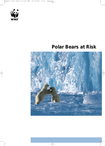 Polar Bears at Risk - Panda