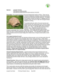 Species: Leopard Tortoise - Tortoise Protection Group