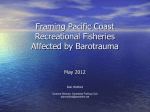 The 2003 Coastside / RFA Groundfish Survey Report