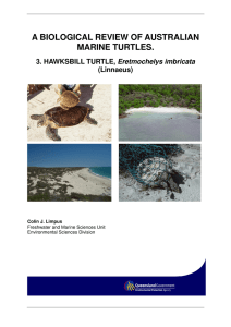 a biological review of australian marine turtles.