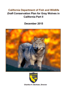 Draft Conservation Plan for the Gray Wolves in