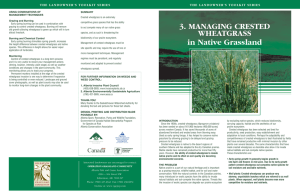 3. MANAGING CRESTED WHEATGRASS in Native