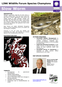 Slow Worm - Scottish Environment LINK
