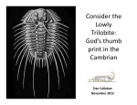 Consider the Lowly Trilobite: God`s thumb print in the Cambrian