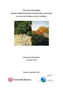 The role of macroalgae and the corallivorous fireworm Hermodice
